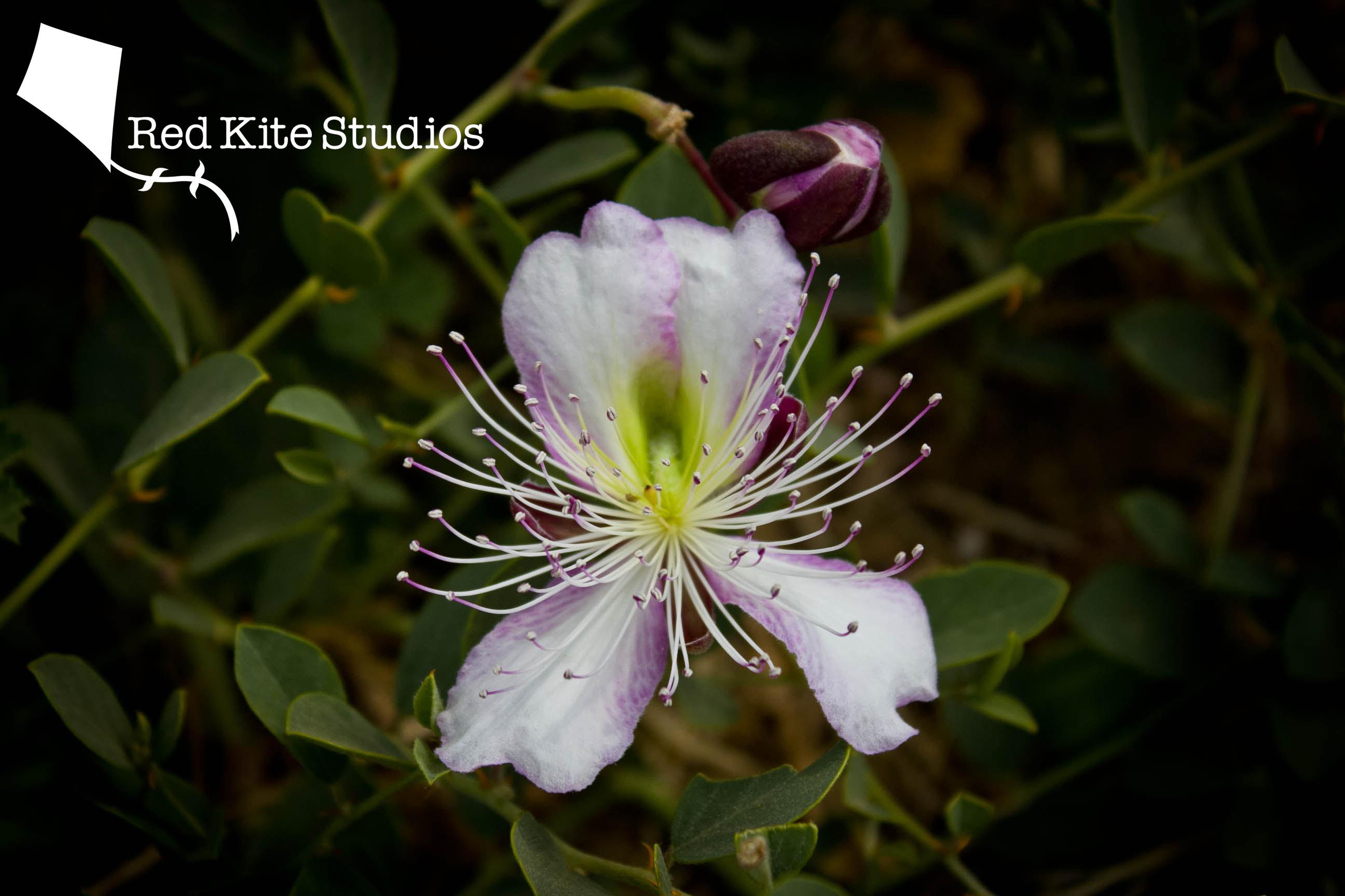 Agrigento flower